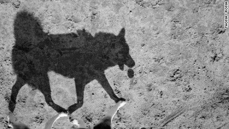"Thomas Roma taps into the ""primal side"" of our canine companions through shadow photographs that evoke cave drawings."
