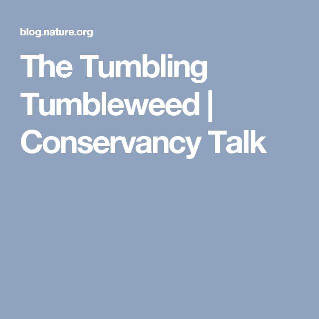The Tumbling Tumbleweed | Conservancy Talk
