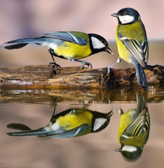 Birds via www.Facebook.com/FionaChilds