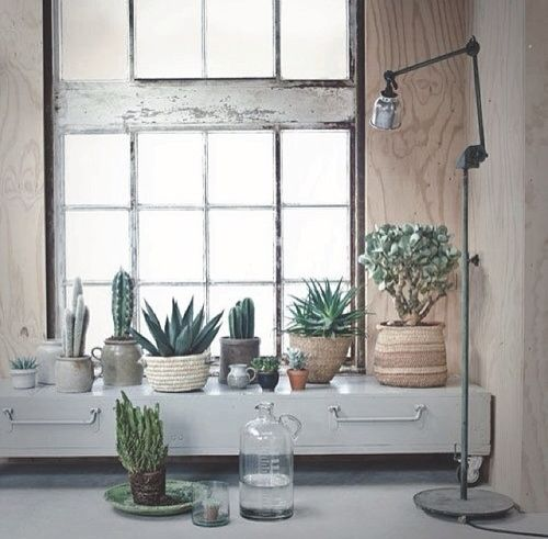 Home Decor #bywstudents I like the different heights of plants, everything neutral except plants, feels 'real' not put on