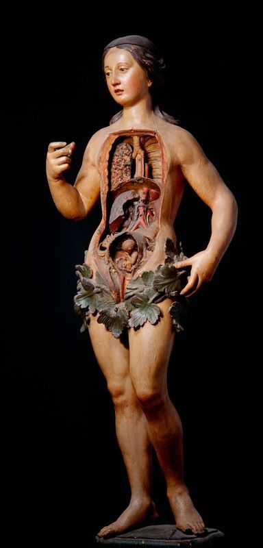 "From the ""Anatomie des Vanités"" exhibit at the Erasmus House in Brussels, Belgium. ""Venus,"" medical mannequin."