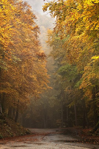 All sizes | France Beauties: Autumn II ~ explored | Flickr - Photo Sharing!