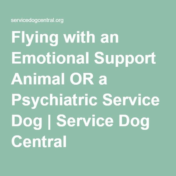 Flying with an Emotional Support Animal OR a Psychiatric Service Dog   Service Dog Central