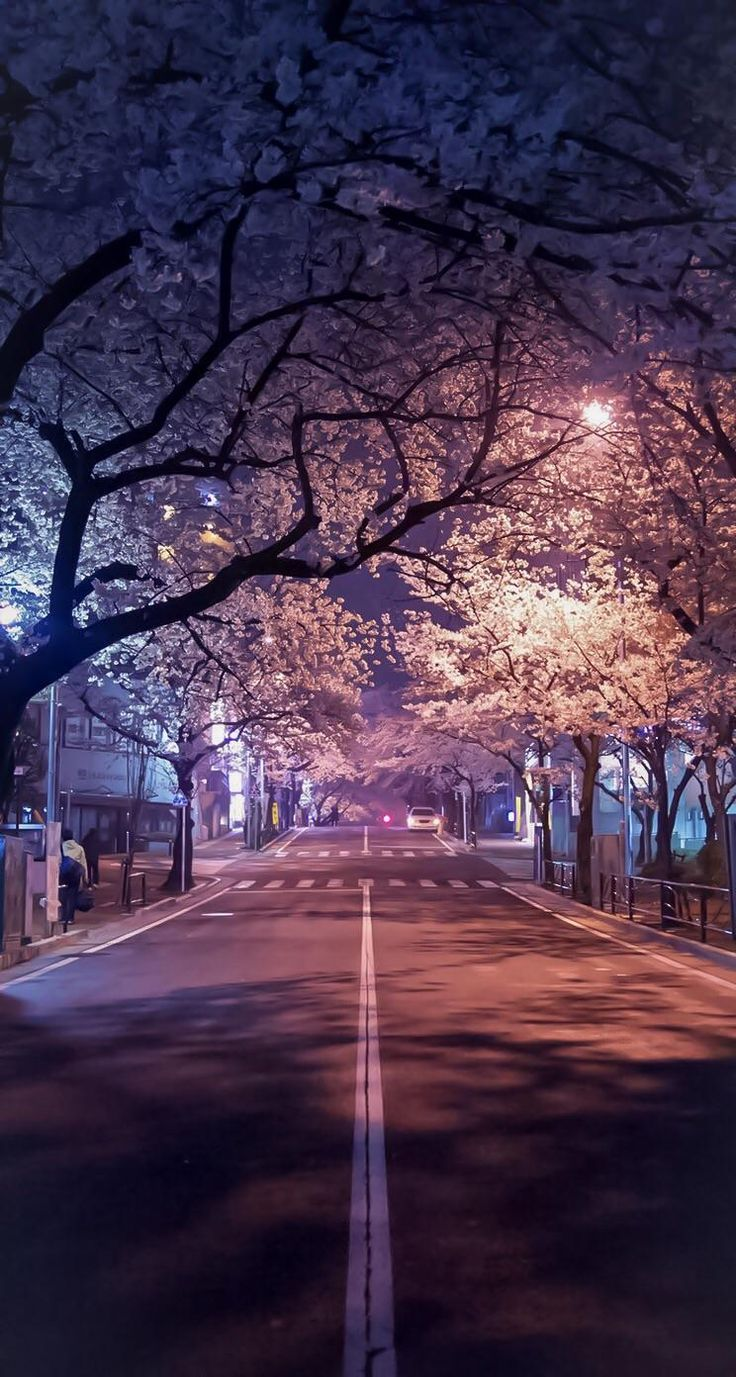 Cherry blossoms at night, Japan.