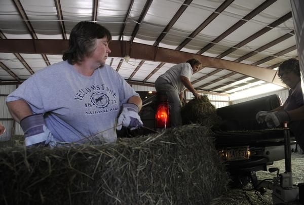 Drought, hay prices putting pressure on horse owners