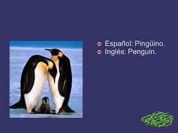 Resultado de imagen para caracteristicas del pinguino en ingles