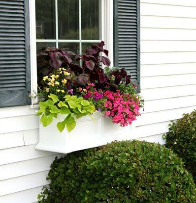 Just a Girl Blog » Window Box Update {Summer Window Box}