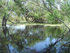 Torrance, California - Madrona Marsh Park