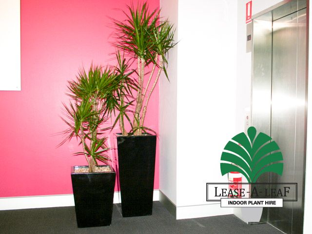 Lease-A-Leaf Client Gallery