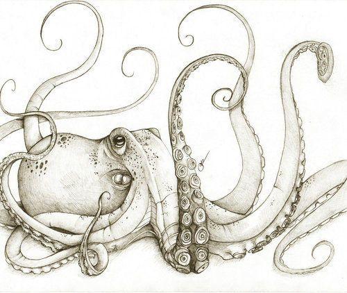 love octopus - amazing creatures, very intelligent