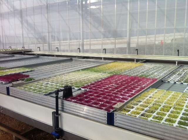 Microgreens growing flowerdale produce pinterest for Best growing medium for microgreens