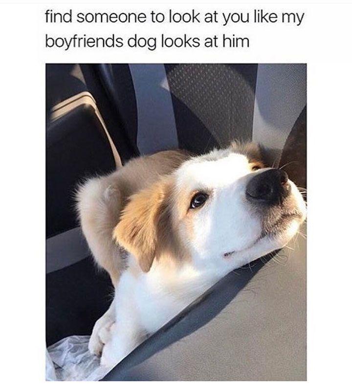 Justviral Co Hund Funnies Witzige Hundebilder Lustige Humor Bilder
