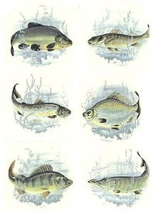 """6 Different Lake River Fish 2 1 2"""" to 2 3 4"""" Waterslide Ceramic Decals 