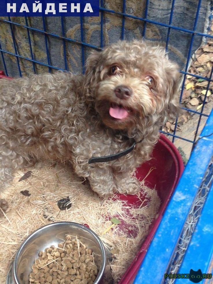 Найдена собака кобель г.Обнинск http://poiskzoo.ru/board/read31692.html  POISKZOO.RU/31692 найдена маленькая собачка мальчик кудрявый похоже порода ши-тцу  РЕПОСТ! @POISKZOO2 #POISKZOO.RU #Найдена #собака #Найдена_собака #НайденаСобака #Обнинск