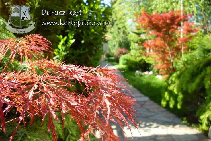 Kerti növények, kerttervezés, ültetés | Durucz Kert