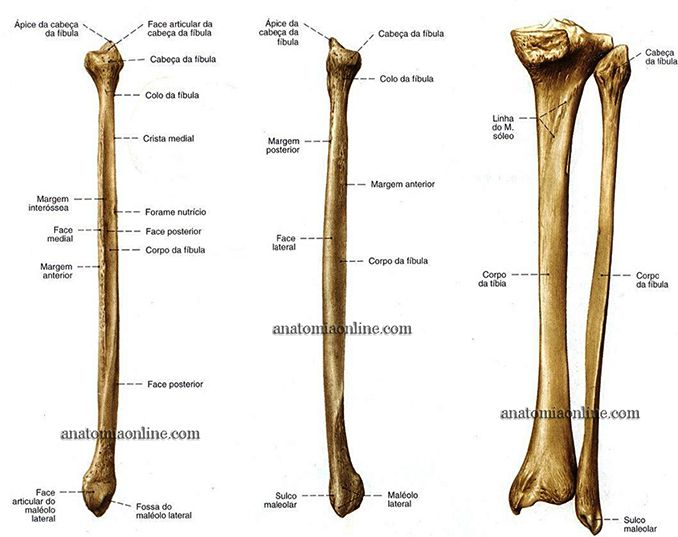 Anatomia Online - Ossos do Membro Inferior