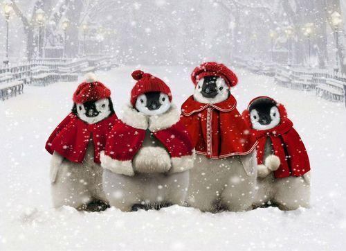 adorable penguin winter scene