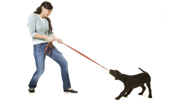 How to train your dog in four simple steps -- If your dog is out of control, fear not - Perth's most respected canine behaviour expert Kathy Kopellis McLeod has five tips to help you get the better of your unruly pooch.