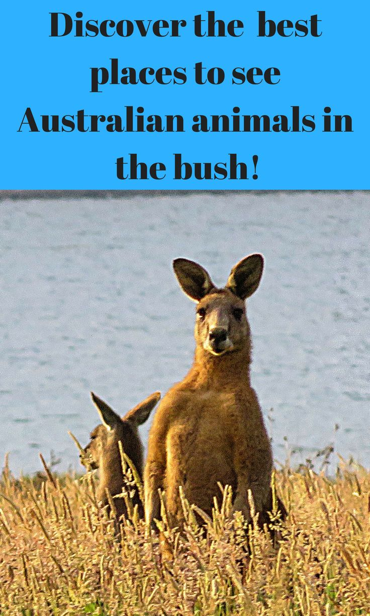 Discover the 17 best places to see Australian animals in the bush!