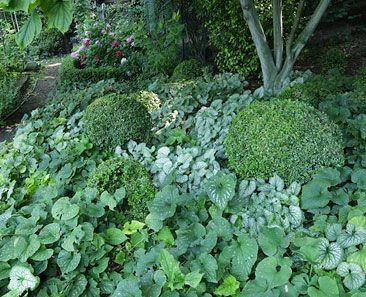 plantes pour l'ombre : L'herbe aux goûteux à feuillage panaché (Aegopodium podagraria 'Variegatum') (...) les épimèdes, au beau feuillage persistant, sont les rois de l'ombre sèche. (...) Les pervenches, peu exigeantes, courent sur le sol, avec des petites feuilles persistantes, parsemées, de mars à juin, de jolies corolles bleues ou blanches.  Les plantes couvre-sol, déroulez le tapis vert | botanic.com