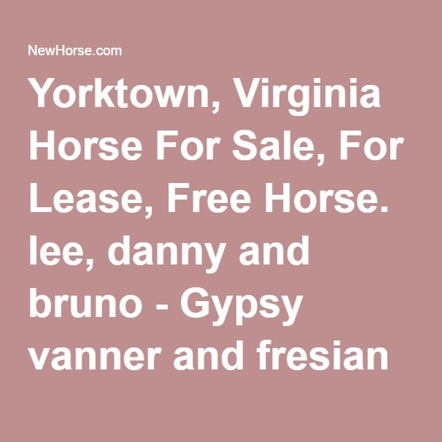 Yorktown, Virginia Horse For Sale, For Lease, Free Horse. lee, danny and bruno - Gypsy vanner and fresian horses for adoption AVAILABLE