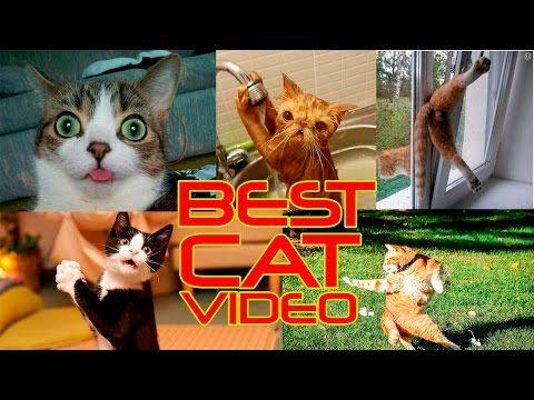 Приколы с котами – самые смешные моменты с котами- новая подборка. - YouTube