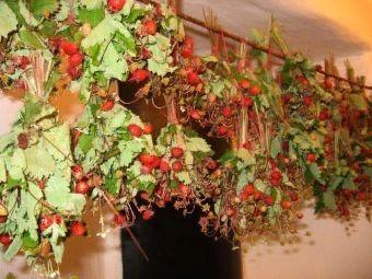 как сушить ягоды для чая