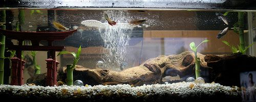 Adding Driftwood - Simplest Way To Lower pH Naturally (soak your driftwood in a separate container (completely submerged, not floating) for 1-2 weeks prior to introducing it to your tank, or boil it to sterilize it. [ http://homeaquaria.com/4-simple-ways-to-lower-aquarium-ph-naturally/#ixzz3Nb3nauHO]