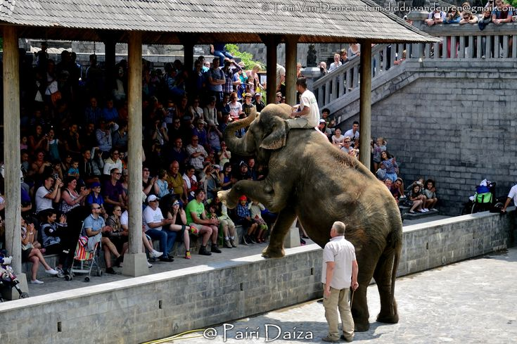 https://flic.kr/p/vKdZN7 | Aziatische olifant - Elephas maximus - Asian Elephant | @ Pairi Daiza