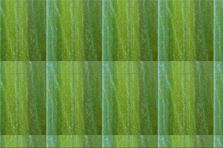Wandkacheln-gruen