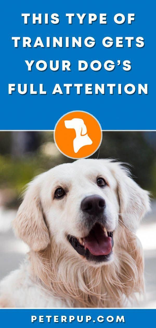 This Positive Dog Training Is A Type Of Obedience Dog Training To