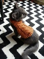 Free pattern for cat sweater. My sister wants me to knit a sweater for her cat. I'm tempted because if I do it, her cat will wear a sweater. Lol!