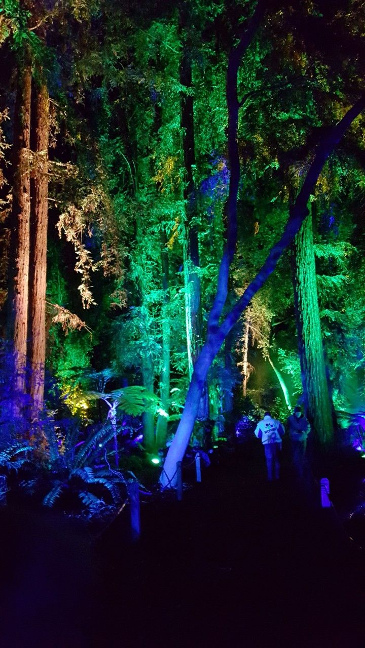 d254606ea44d24de0e83c4cc531639d4 - Enchanted Forest Of Lights At Descanso Gardens