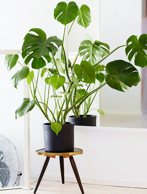 A few well-placed plants can brighten up your space instantly. And these seven picks are so low maintenance, they practically take care of themselves.