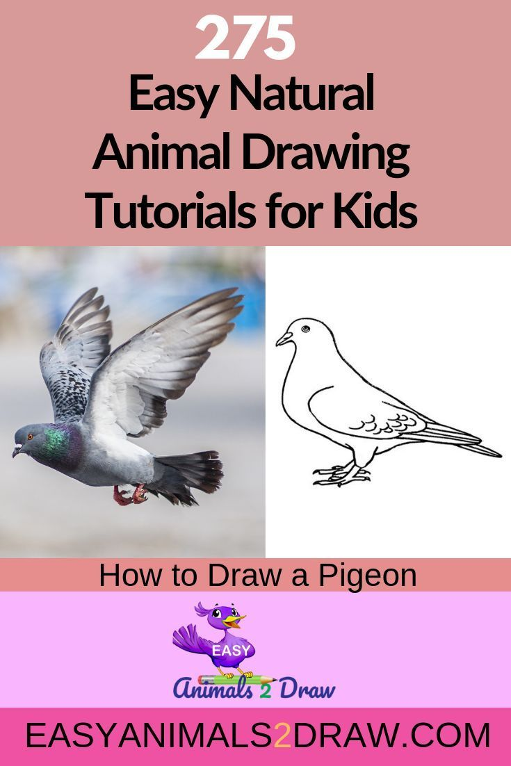 How To Draw A Pigeon Step By Step Easy Animals 2 Draw Drawings Animal Drawings Drawing Tutorials For Kids
