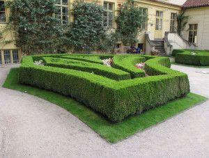 Siepe realizzata con piante di Bosso