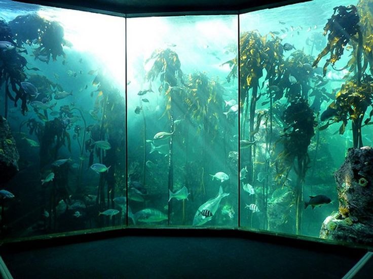 The kelp forest in Cape Town Aquarium, one of the most relaxing places in the city.  BelAfrique - Your personal travel planner - www.belafrique.com
