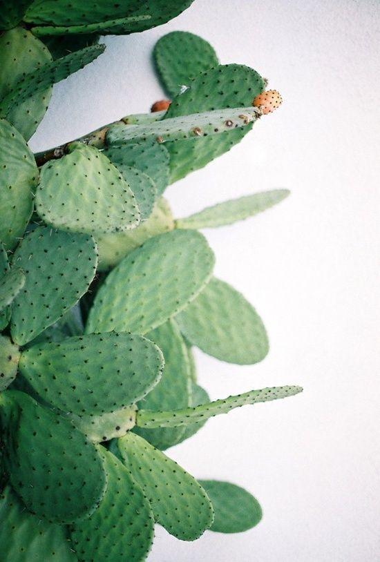 Cactus d'amour