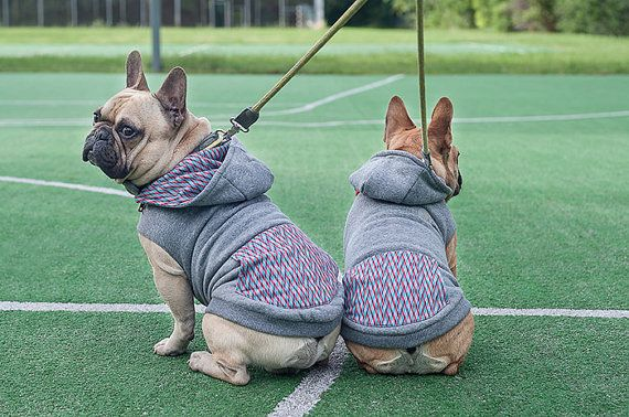 Warm and comfortable Dog Hoodie for small and medium dogs. Premium dogwear. Handmade dogclothes.