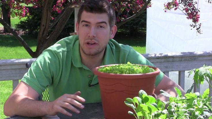 22 Best Ideas About Fire Escape Gardening On Pinterest 640 x 480