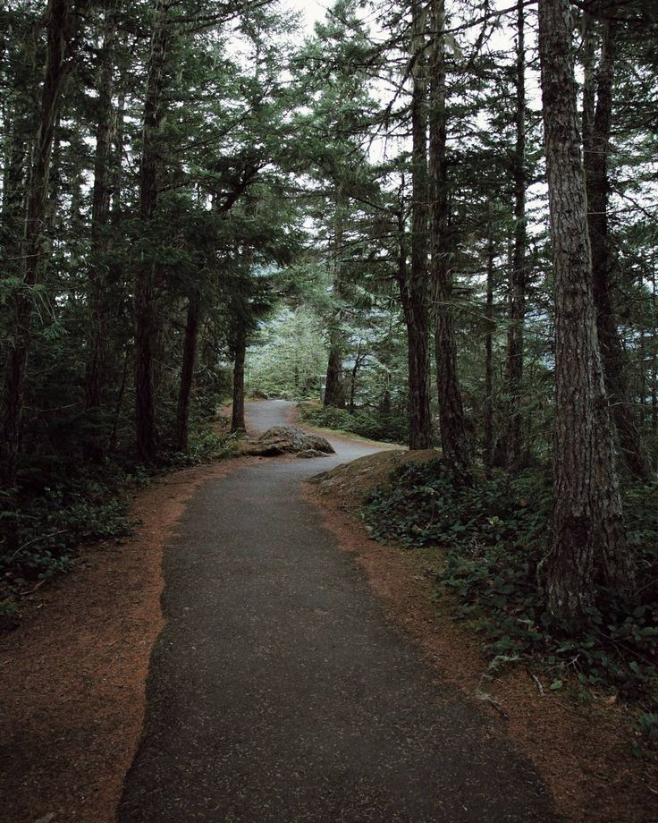 """""""Forest paths//"""""""