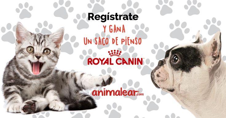 ¡EN OTOÑO PIENSO GRATIS ROYAL CANIN! https://basicfront.easypromosapp.com/p/916095?uid=638819436&lc=es-es