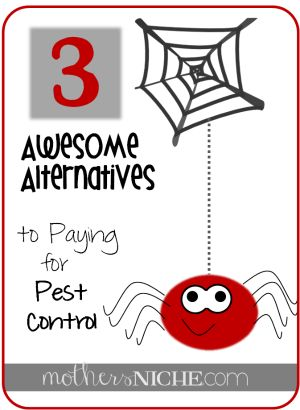 kill spiders and bugs without calling pest control