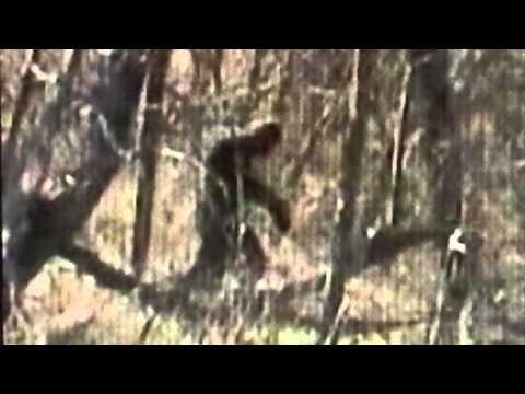 DAVE STUMPF BIGFOOT VIDEOS #95 TRAIL CAM of?   BigfootBlogger.Com
