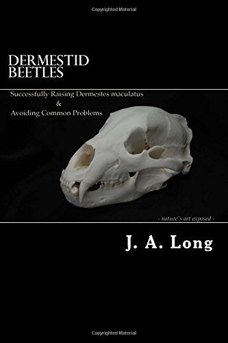 Dermestid Beetles: Successfully Raising Dermestes maculatus and Avoiding Common Problems by J. A. Long