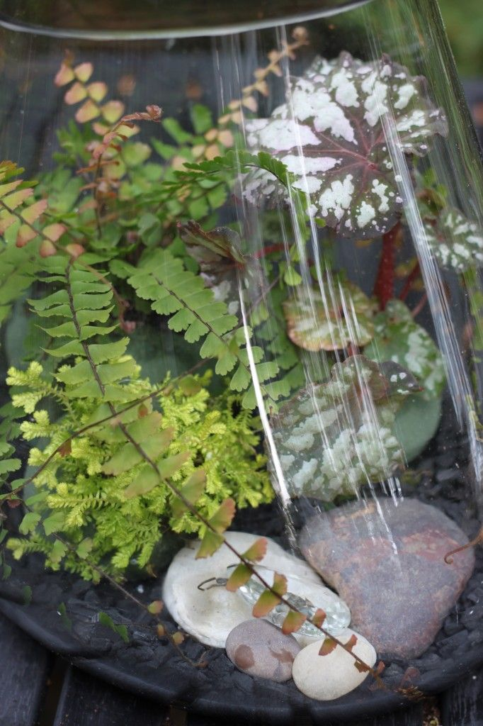 the making of a woodland terrarium | cocoon home