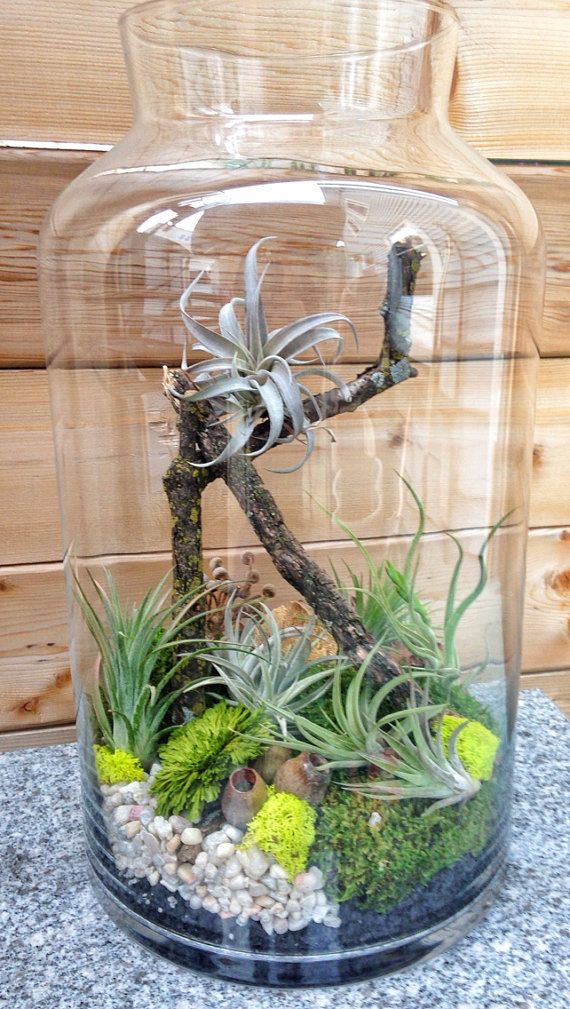 One of a Kind Jumbo Easy Care Low Maintenance by lovelyterrariums