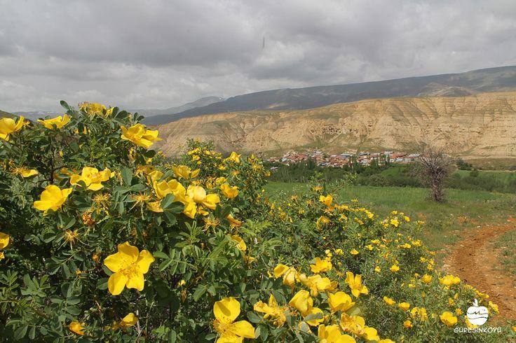 #Guresinkoyu Bahar Mevsimi