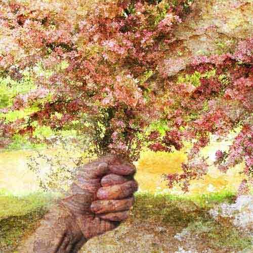 Terri Robin Vernon digital illustration