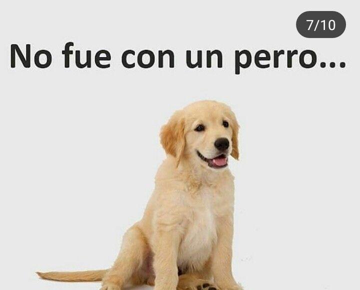 Pin De Polu On Ice En Memes Perros Frases De La Vida Frases